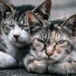 絶対に知っておいてもらいたい地域猫と地域猫団体の基本