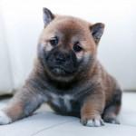 狂犬病予防接種で動物病院の混雑を避ける方法